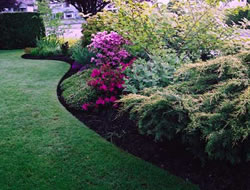 Landscaping Service in Long Beach